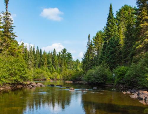 Kanadas Nationalparks: Natur und Tierwelt mit besonderem Flair